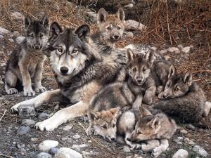 Lobos cuidados
