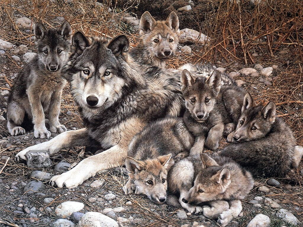 mundo de lobos:
