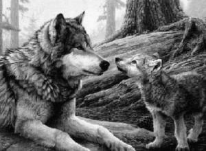 La comunicaci??n en los lobos: aprendiendo a aullar